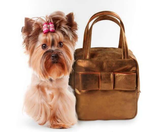 handbag Camomilla a/i 2013 14